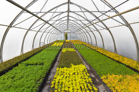 young plants growing in greenhouse at