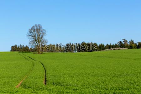 summer rural sping landscape