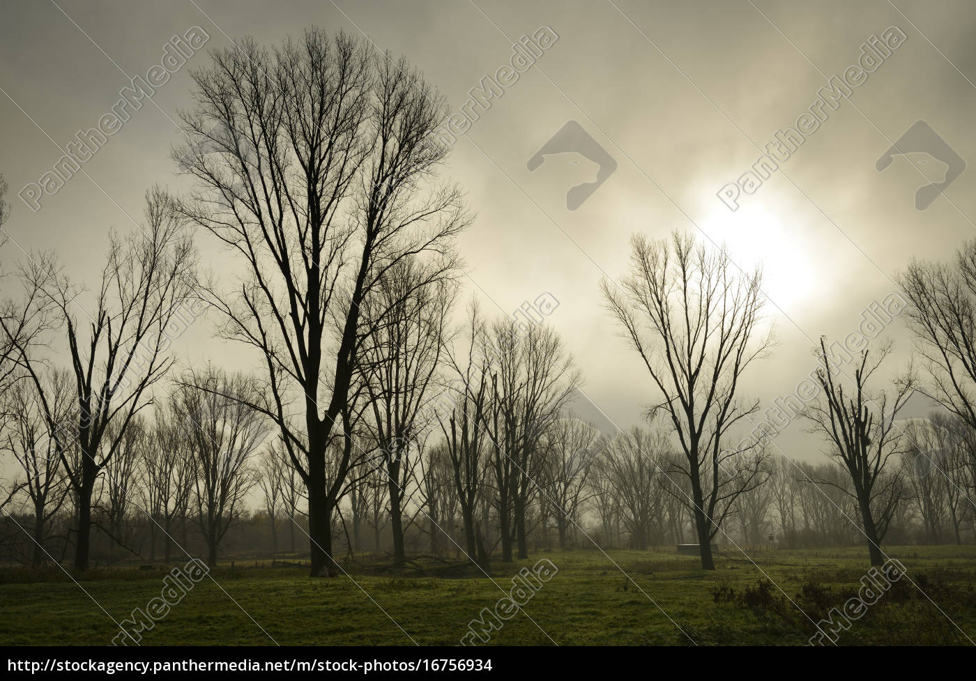 germany, , north, rhine-westphalia, , neuss, , mystical, atmosphere - 16756934