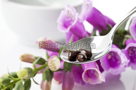 foxglove digitalis purpurea medical plant spoon