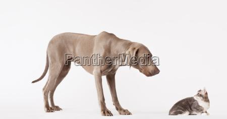 hund und katze die einander betrachten