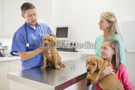 tierarzt untersuchen hund in vet s