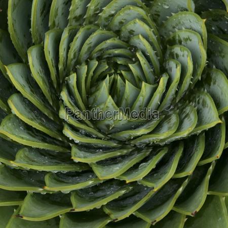 close up von spiral blattmuster