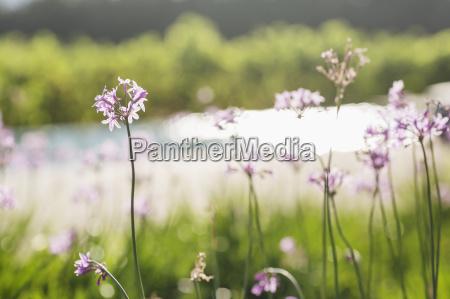 garten blume pflanze gewaechs leuchten leuchtet