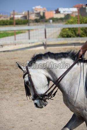 pferd koppel pferde sAEugetier spanien sommer