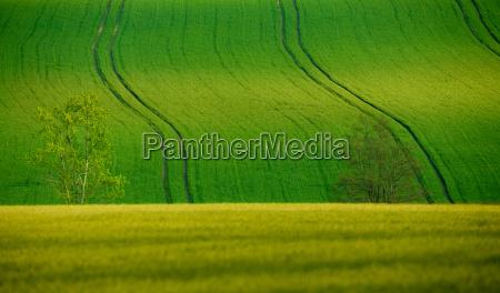 beautiful summer rural landscape lines