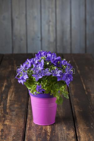 farbe blume pflanze gewaechs holz bluete