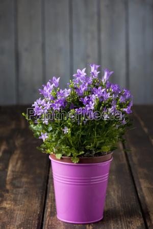 blume pflanze gewaechs holz bluete erbluehen