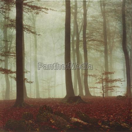 laubwald im herbst morgenstimmung struktureffekt