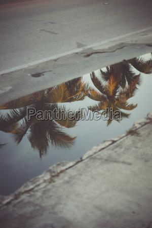 usa florida key west palm trees
