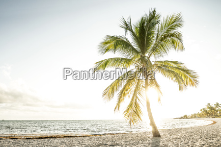 usa florida key west palm tree