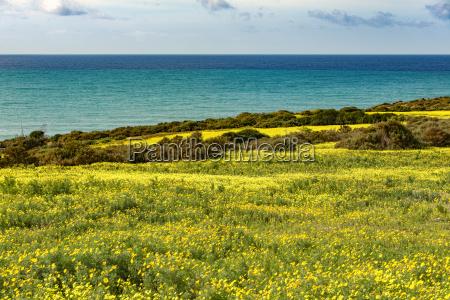 italy sicily coast blooming plants bermuda
