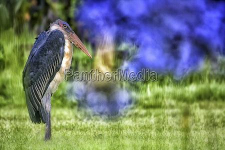 fahrt reisen tier vogel bluete erbluehen