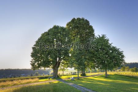 germany baden wuerttemberg lime trees near