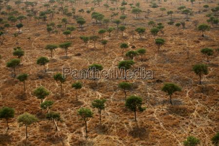 fahrt reisen baum afrika savanne outdoor