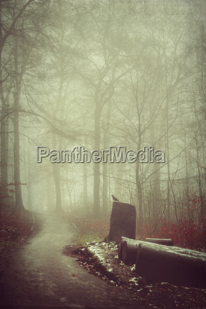 deutschland waldweg im nebel