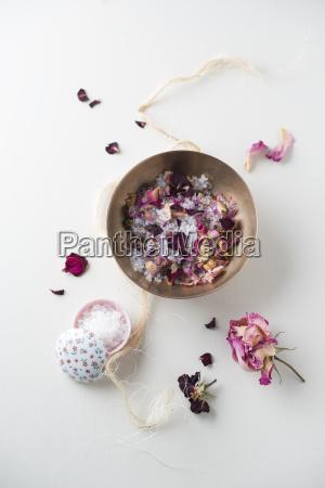 stilleben blume pflanze gewaechs rose bluete