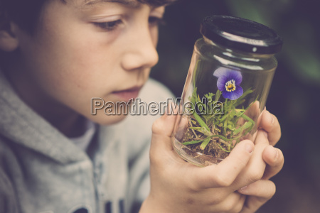 boy watching pansy in a glass