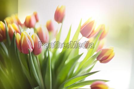 stilleben blatt baumblatt blume pflanze gewaechs