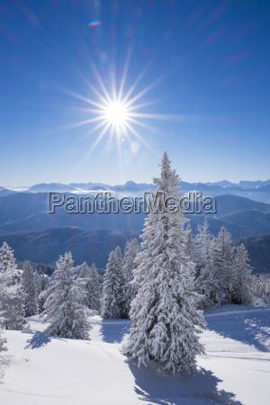fahrt reisen baum winter sonnenlicht outdoor
