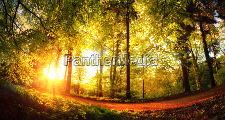 trees immersed in golden light from