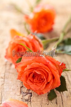 rosen auf dem tisch
