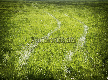 tire tracks in a meadow
