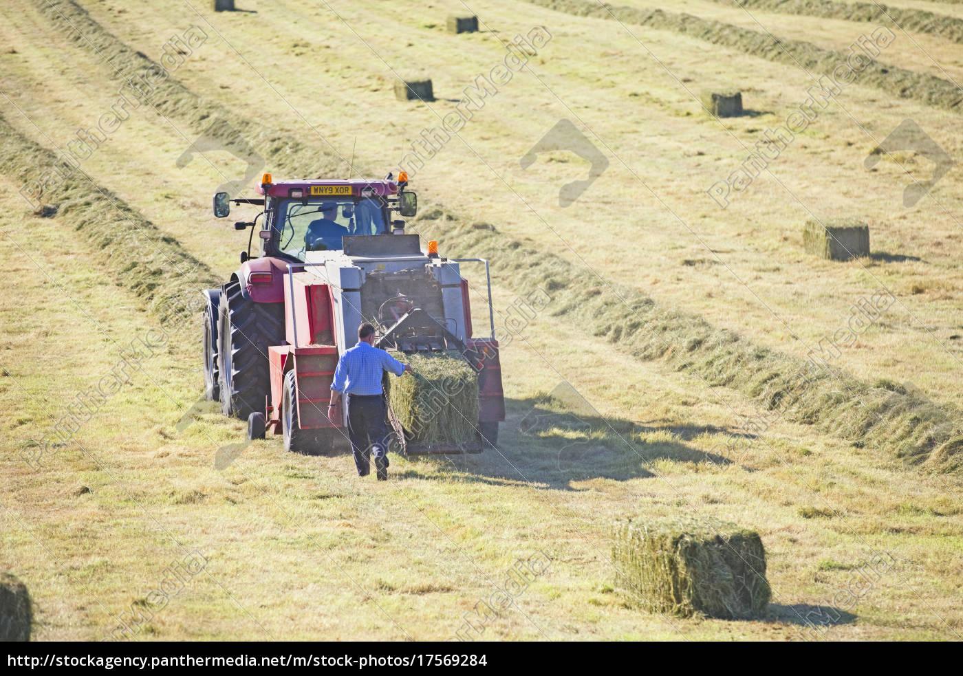 traktor, und, bauer, ballen, heu, im - 17569284