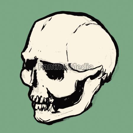 illustration of human skull against green