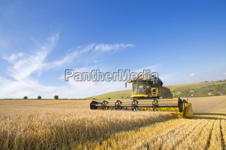 combine harvester harvesting wheat in sunny