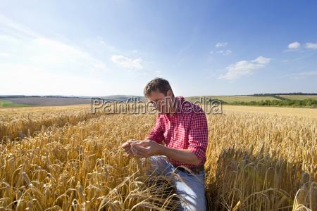 farmer examining barley in sunny field