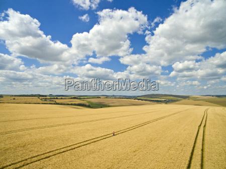 aerial view of farmer walking through