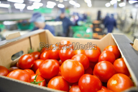 close up ripe red tomatoes packed