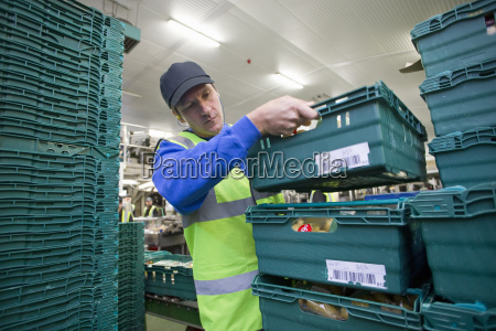 worker stacking bins of packaged potatoes
