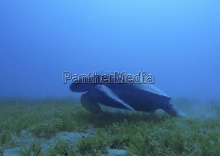 blau tier horizontal unterwasser outdoor freiluft