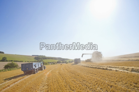combine harvester with tractors and trailers