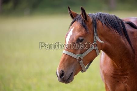 pferd auf einer lichtung ein portraet