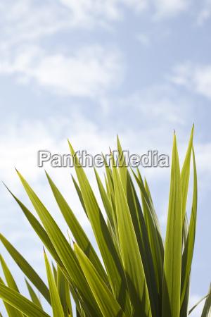 detail von green palm frond arcachon