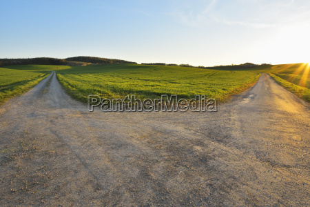 forked road in field with sun