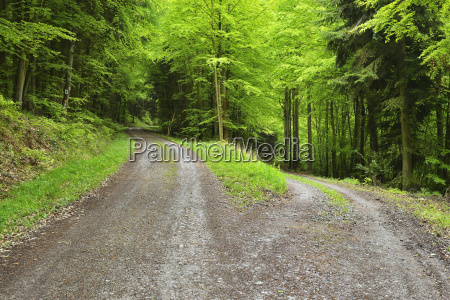 forked forest road in spring miltenberg