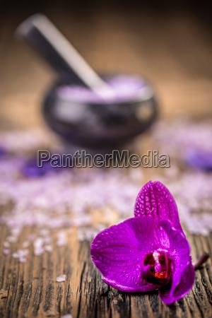 blume pflanze gewaechs knabenkraut orchidee