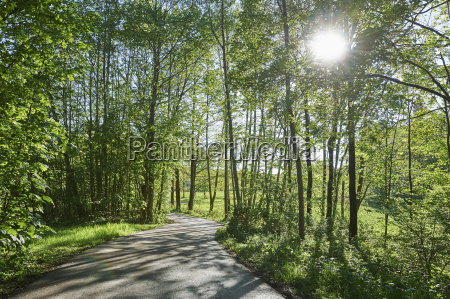 landscape with road through forest on