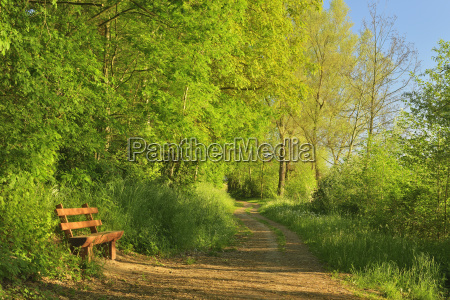bench by path in morning in