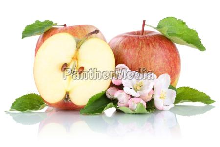 apple apples fruit fruit cut exempted
