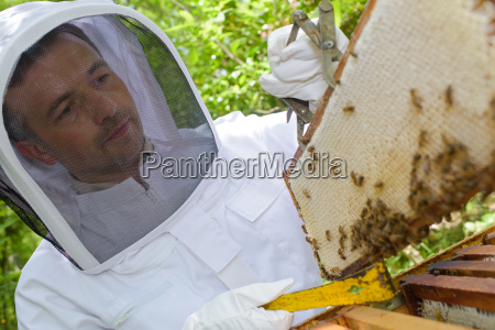beekeeper with a sealed frame