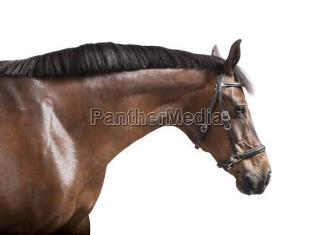 exempted horsehead