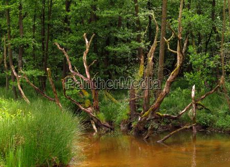im auwald an der heve naturpark