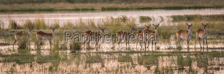 saeugetier afrika tiere savanne leuchten leuchtet