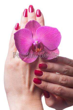 gepflegte fingernaegel mit orchideenbluete isoliert