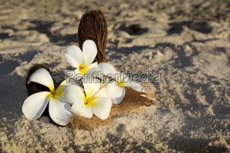 blumenschmuck fuer hochzeit am strand seychellen